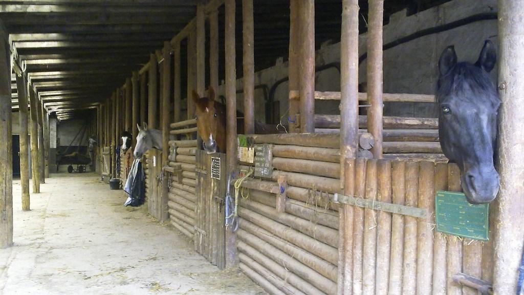 Neuer Stall 3 - naumeshof