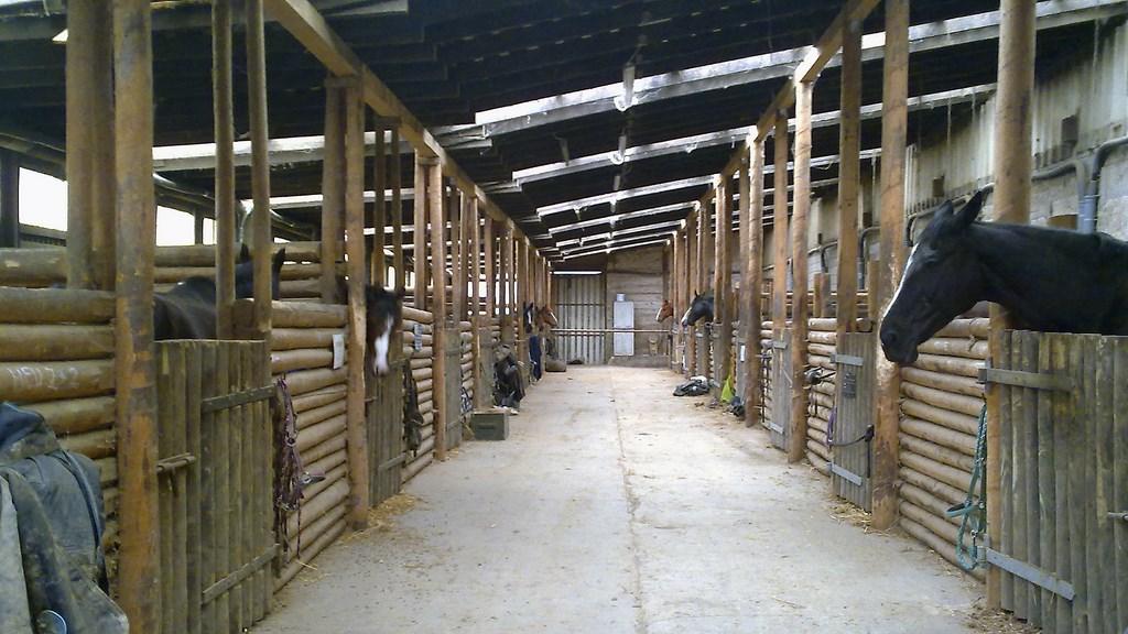 Neuer Stall 2 - naumeshof