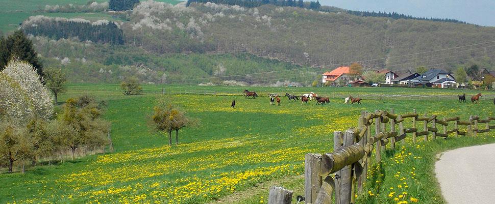 Slideshow 08 Naumeshof Morscheid – Pferde 2