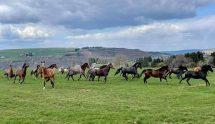 Glückliche Pferde, die ganzjährig auf die Koppeln kommen.