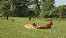 Eine unserer Rentner-Herden auf ihrer wunderschönen Koppel.