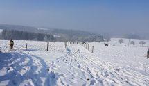 Natürlich kommen die Pferde auch im Winter täglich raus.